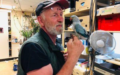 Dinobouwer en paradijsvogel
